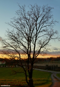 tree-silhouette-in-sunset_finland